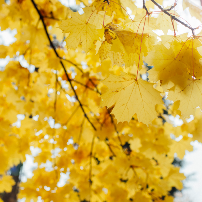 Margaret albaugh photography blog spokane photographers for Nishinomiya tsutakawa japanese garden koi