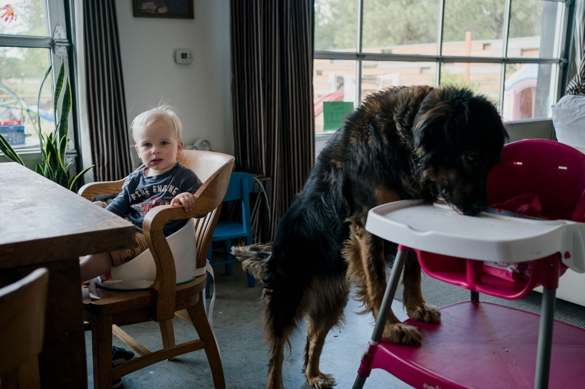dog sneaking food off baby high chair