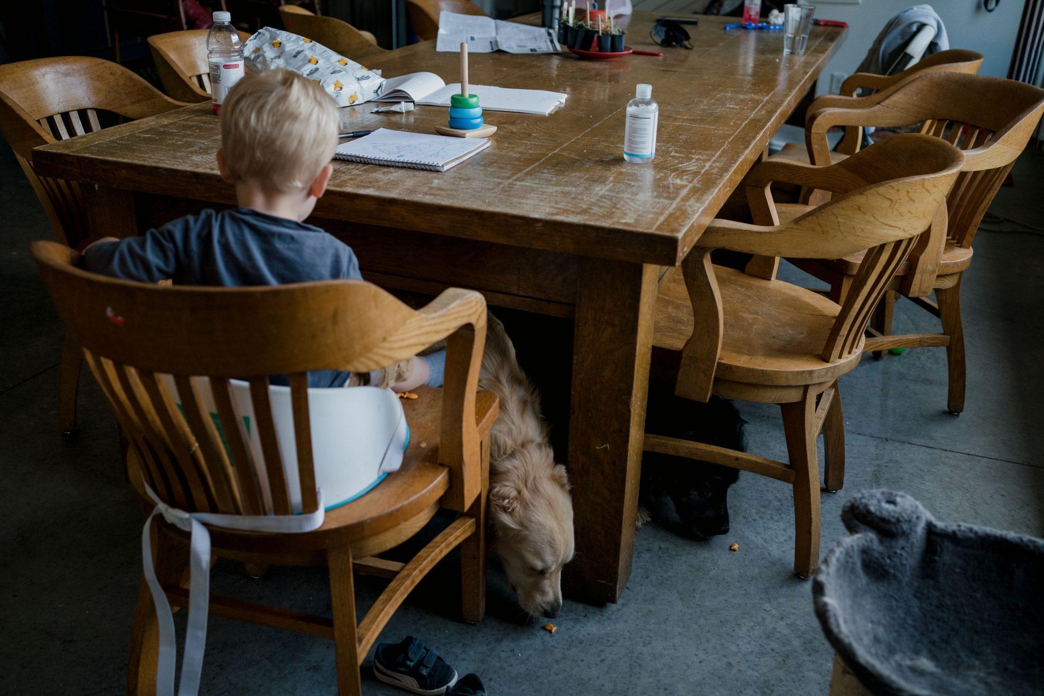 dogs eating snacks off floor